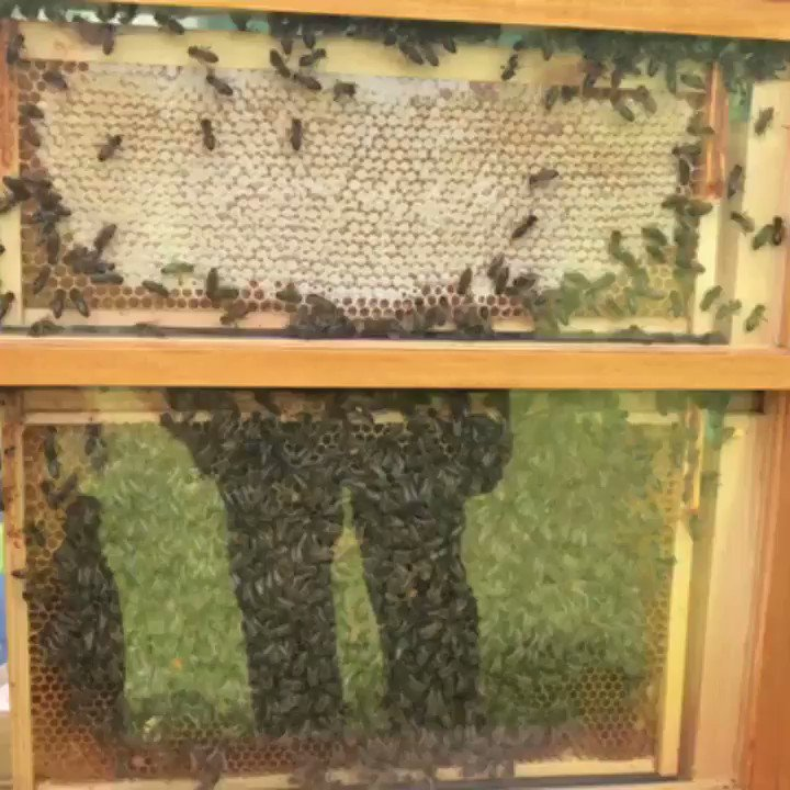 Image for the Tweet beginning: The Meon Valley Beekeepers have