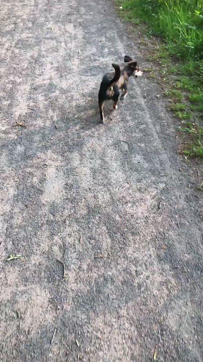 Wandelen met mn mini hondje. Slot Zuylen #oudzuilen nee heeft niks met zijn pootje #huppelloopje