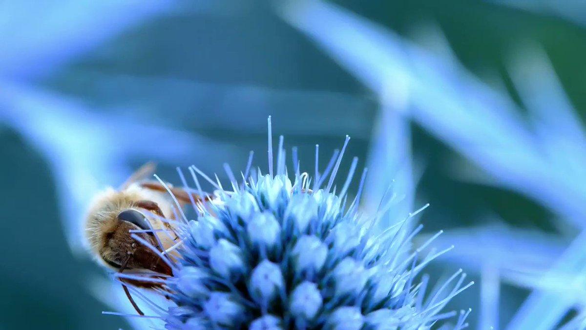 NABU Biodiversität's photo on #Bienen