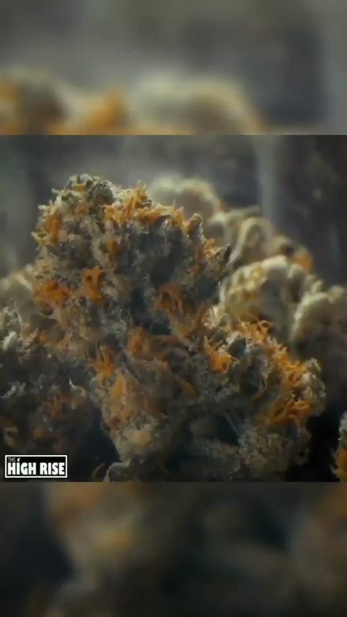Image for the Tweet beginning: Wake N Bake!