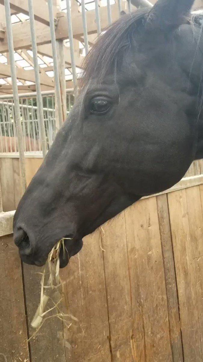 【モモセライディングファーム動画③】重賞4勝のサトノノブレス8歳。名門「メジロ牧場」生産馬最後の世代。同期の好敵手、キズナやエピファネイアは今年初年度産駒がデビュー。※見学可