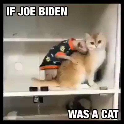 If @JoeBiden was a cat. 😂