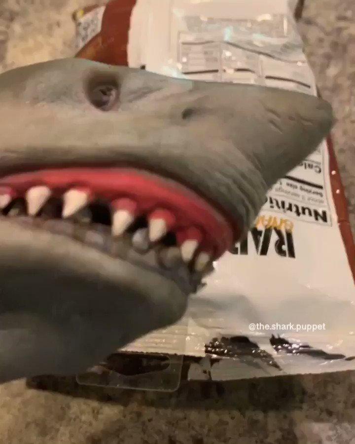 RT @thesharkpuppet: Shark Puppet tries cardi b drugged chips https://t.co/f3M10B7zih
