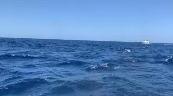 Cape Verdes - My Victoria went 1-1 on Blue Marlin. #BillfishADay