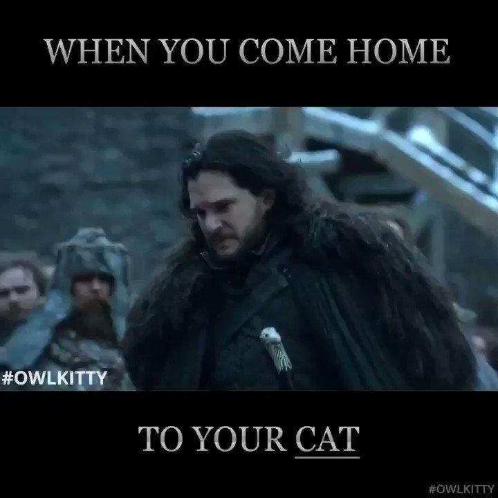 Cat people can relate... #GoT #JonSnow
