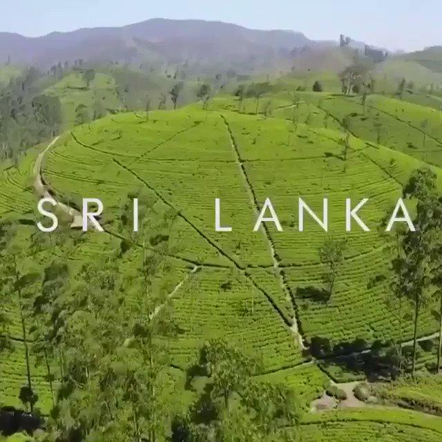 Tourist arrivals gradually growing. Official figures show tourism is recovering in #SriLanka 🔝April 166,975 ↘️May 37,800 ↗️June 63,000 ↗️July 115,701 Emergency Regulations lifted #SriLankaIsSafeToTravel #VisitSriLanka 🇱🇰 #LKA #SoSriLanka 📹@ddoubleblack