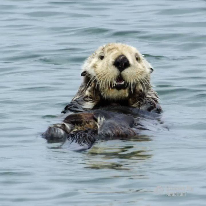 ok here's a sea otter grooming its face you earned it