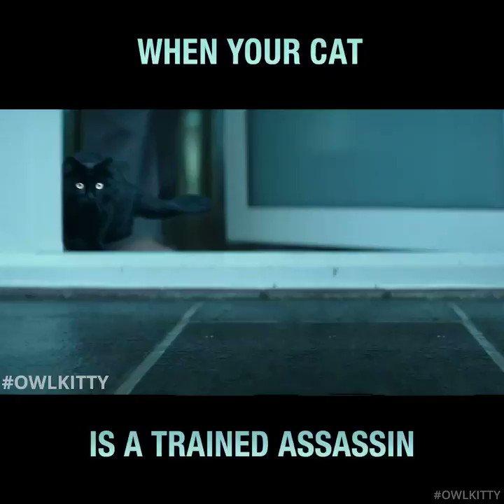 Prepare for war😼 #JohnWick #owlkitty