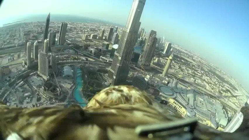Un águila desciende en picado hasta la mano de su cuidador. Visto en Redddit 😍