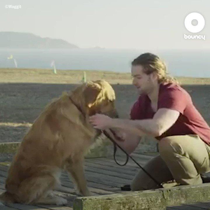 愛犬の体の変化にすぐ気づいてあげることができますよ🐩🐶by @Waggit_Dog 詳しくはこちら👉#愛犬 #犬好き #犬がいる生活 #ペット #犬は家族