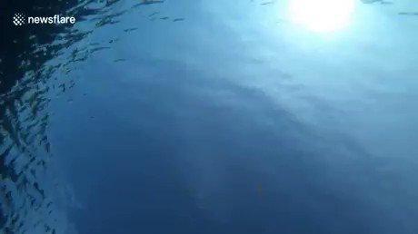 バブルリング クラゲ