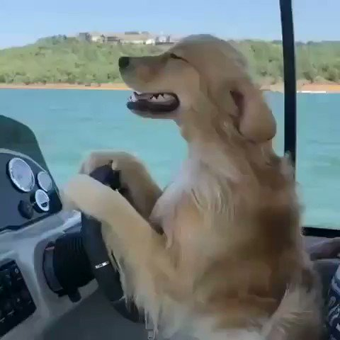 Dogs, bruh...💪🐶😍🛥☀️🤙😎