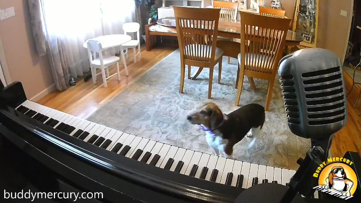 NEW!!! Some Buddy To Love!!! 👸 Queen Cover! Ooh, each morning I get up I die a little Can barely stand on my feet...Somebody (somebody) ooh somebody (somebody) Can anybody find me somebody to love? #AdoptDontShop #TuesdayThoughts #TuesdayMotivation #dog #buddymercury