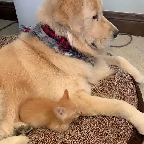 This dog helping a kitty to stay warm https://t.co/NFzyS7StOT
