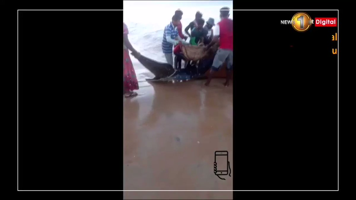 Respect 🙏 Villagers and fishermen rescued a Whale Shark, stranded at Mullivaikal beach area in Mullaitivu and supported to swim deep waters. #Humanity #LKA #SriLanka via @munza14 @NewsfirstSL