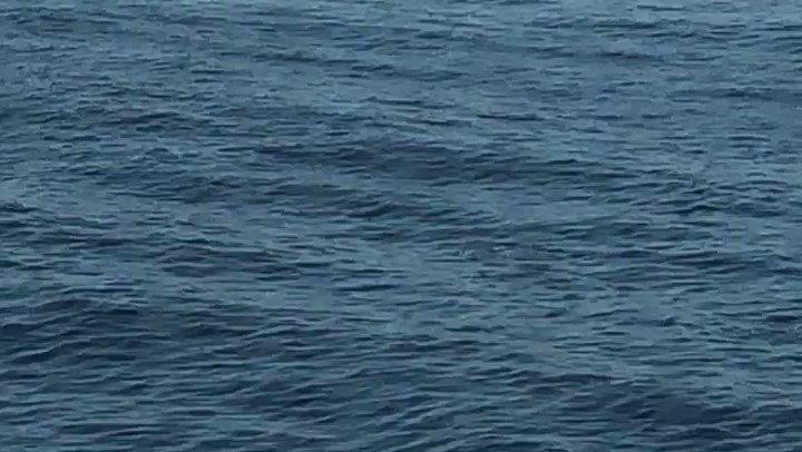 Dolphins are swimming a lot today too🐬🐬🐬  今日もイルカが元気に泳いでます!  #dolphins #pacificocean #japancoast #voyage #officer #sailor #seamenslife #roroship #rorovessel #carcarriervessel #lifeonship #イルカ #太平洋 #三陸沖 #航行中
