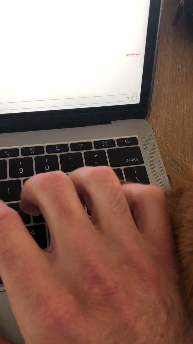 Computer-loving cat won't take its head off the keyboard