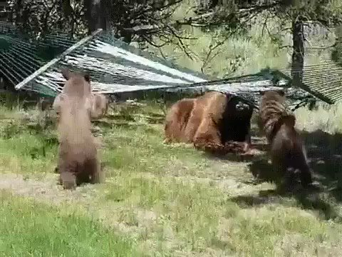 Just some bear cubs enjoying a hammock to make your day 💕🐻