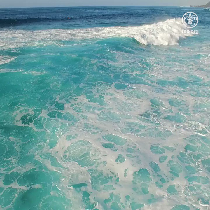 Take a minute to think about our oceans...  🌊Oceans act as the largest carbon sink in the 🌍 🌊Oceans host 80% of life on the 🌍 🌊Oceans provide half of the 🌍's oxygen  How we can all act to #SaveOurOceans 👇