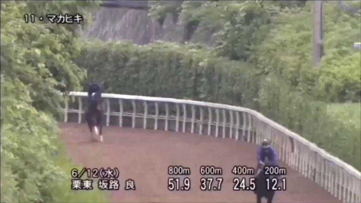 #宝塚記念 #マカヒキ  大阪杯4着後は在厩で調整。 2週前、1週前と栗東坂路で一杯に追われ、好時計。今年春は昨年の秋に比べると見せ場ある競馬が続いている。決して侮れない。