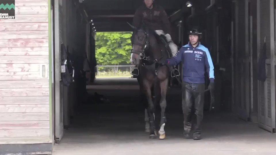 6月4日の #ダブルアンコール です。 馬装を済ませて屋内周回コース調教へ、600mの屋内周回コース6周を集中した様子で駆け抜けていきます。  ▼本馬の情報はこちら🐴 【https://t.co/am0OsbBBpH】 #ジェンティルドンナ 全妹 #ドナブリーニ2017 #バヌーシー