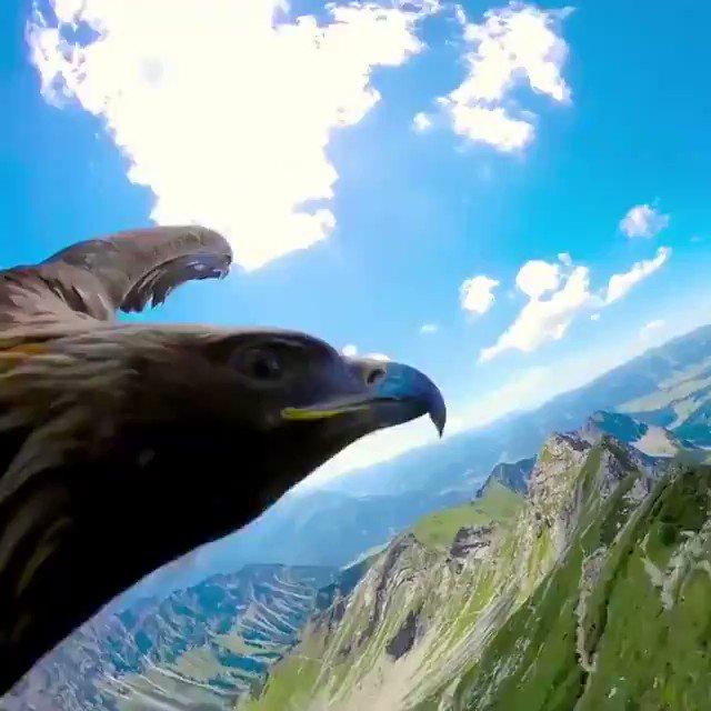 鳥にカメラつけたら凄かった