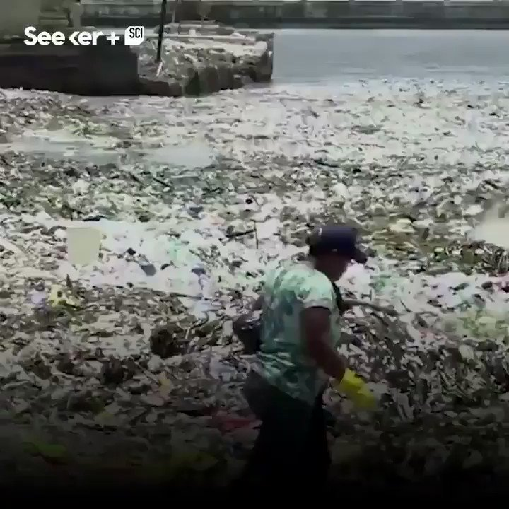 It's horrible!!! #Plastic waves!!! We have to fight against this harmful #singleuseplastic and appeal 2 ban it immediately to #saveourplanet & #marinelife. Also every state should improve #recycling & #waste-reduction system() to beat the #plasticpollution #cc