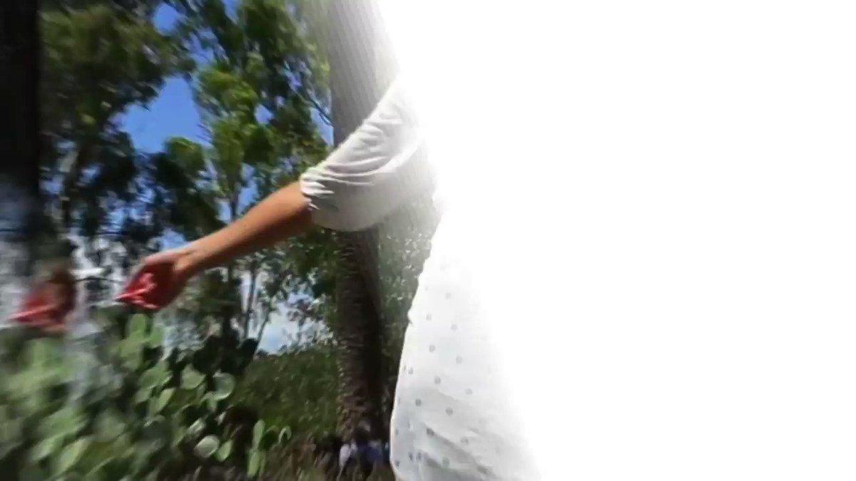 #VIDEO : Visitez St-Paul de Vence grâce à notre Pass, la #CotedazurCard et sa formule #Culture ! Sont inclus :  ➡ Entrée à la Fondation #Maeght ➡ Entrée à la Chapelle #Folon et au Musée d'Histoire Locale ➡ Visite guidée à la lanterne  https://www.cotedazur-card.com @otstpauldevence