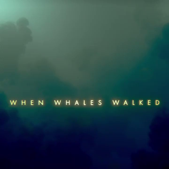 Join top scientists as they follow clues from the fossil record and make new discoveries about four of the world's iconic creatures. #WhenWhalesWalked premieres tonight at 9/8c.