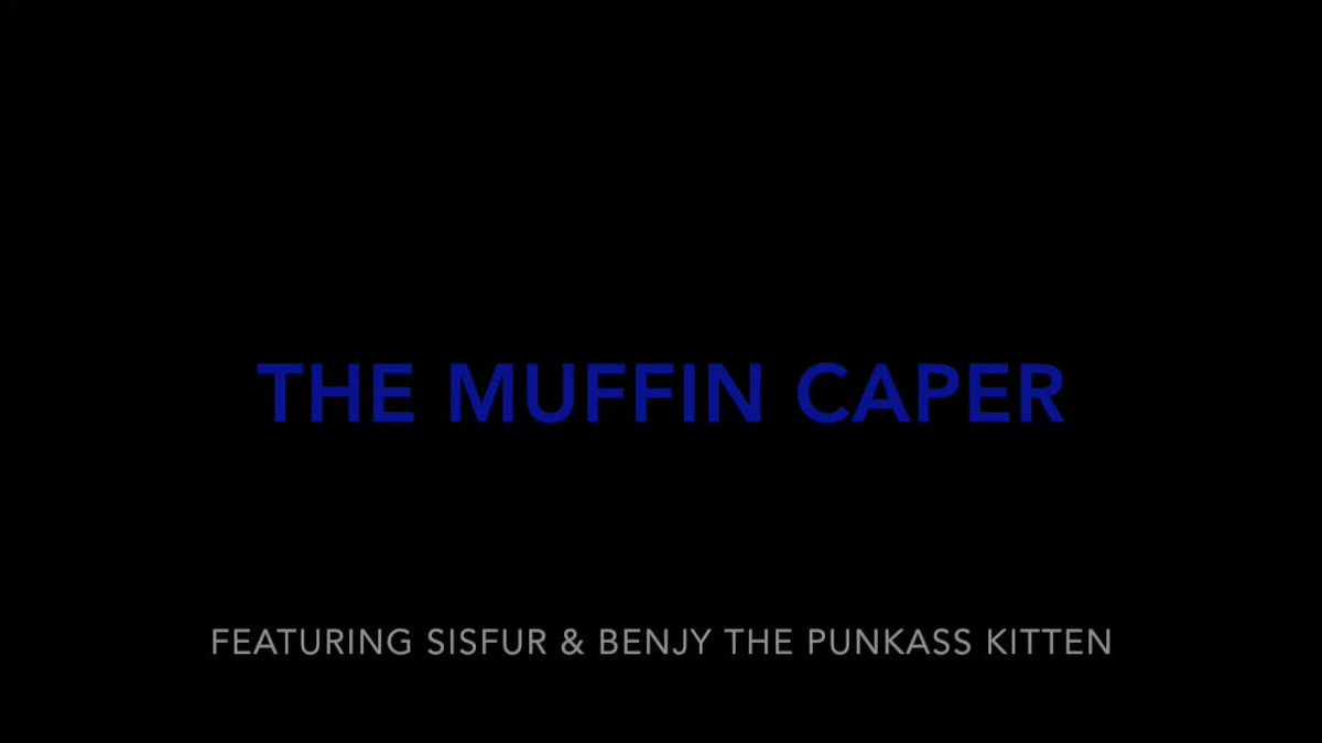Now I am a movie star! 🌟🎥🎬🎞️ #MTIFF  .@JoyOfCats