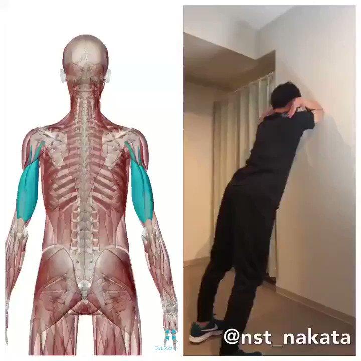 デスクワーカーのように腕を固定するひとには「上腕三頭筋」のキツ〜いストレッチがおすすめです!  これは強度が高めなので、1分やれば肩や胸のあたりまでめちゃくちゃスッキリしますよ。  肩甲骨から肩にかけての重だるい感じが抜けて、硬いひとなら姿勢が良くなって呼吸までしやすくなります😌
