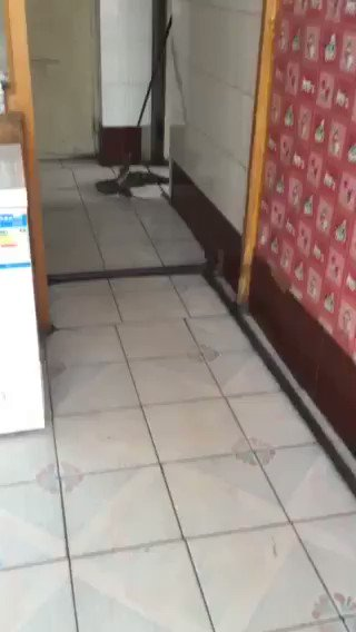 What a useless cat🤣😭
