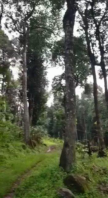 Nature ❤️