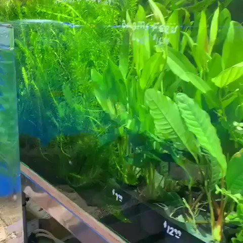fishtank tagged Tweets, Videos and Images | Twitock
