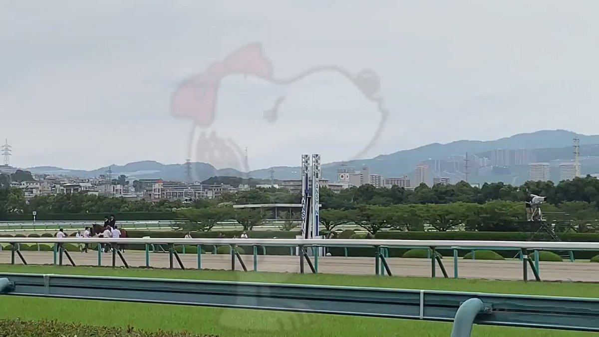 キセキパイセンの返し馬 がんばりました😭 大阪杯も2着だったから今回は!!と思ってみなさん応援にも熱が入ってます #キセキ #宝塚記念 #返し馬