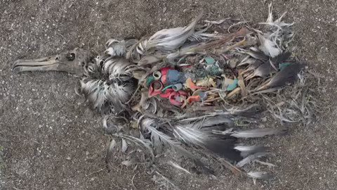 Protect birds 🦢 🐦 🦅: Be the solution and #BeatPlasticPollution Thanks for video Chris Jordan!