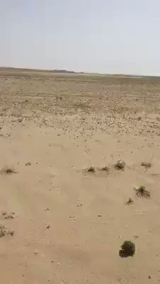 Like biblical plague, locusts descend on #Pakistan's #Sindh provide, the country's second biggest producer of cotton crop. This is Dadu. Video via @NKMalazai