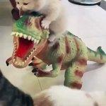 どうしても恐竜から離れたくない子猫ちゃん!親猫が離そうとするも…