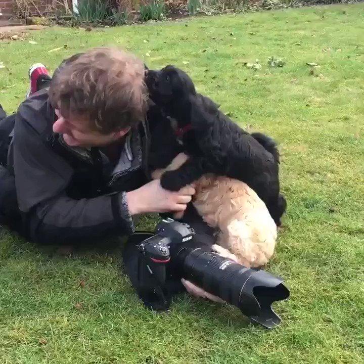 Qué poco se habla de los problemas de ser fotógrafo de cachorritos