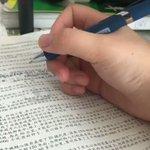 勉強の邪魔してくるハムスターが可愛くて集中できない!!