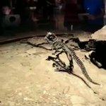 恐竜の博物館でARを導入した結果?骨が歩き回ってる!
