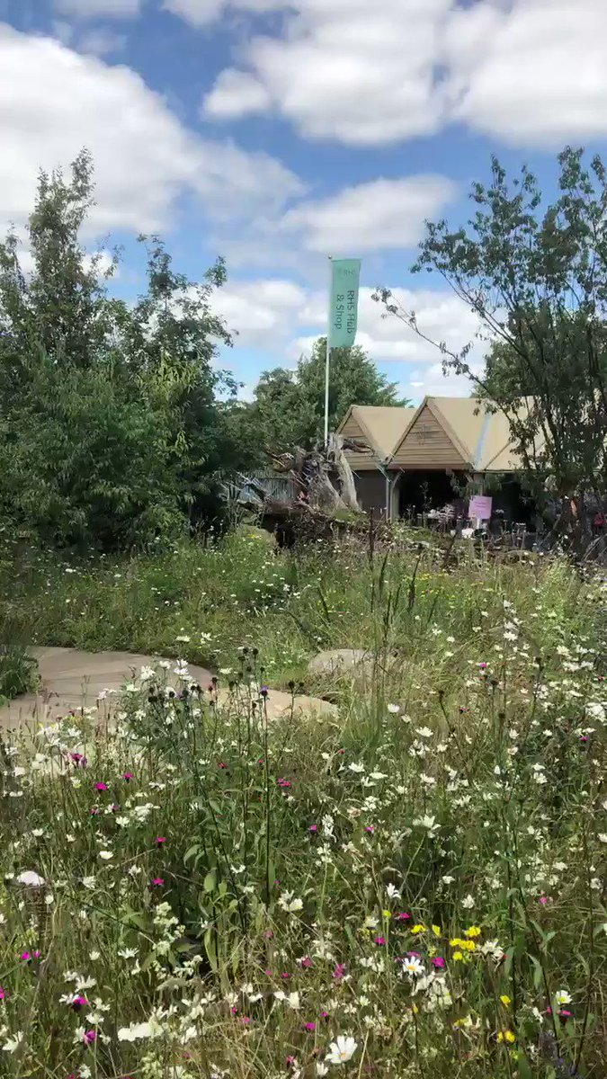 Another look at @The_RHS Back to Nature garden, co-designed by the #DuchessofCambridge and @davies_white, which is currently receiving lots of visitors at #RHSHampton. Its three times the size of the original #RHSChelsea site!