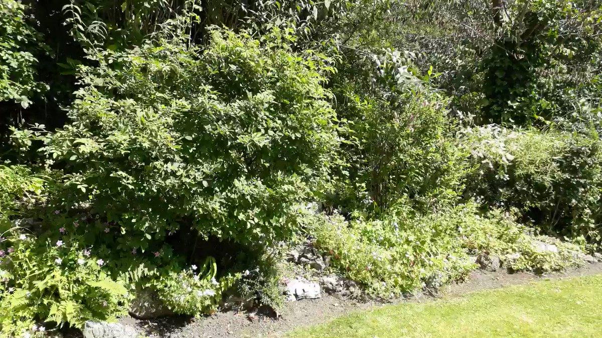 How great does the FWP Garden look #summer #garden
