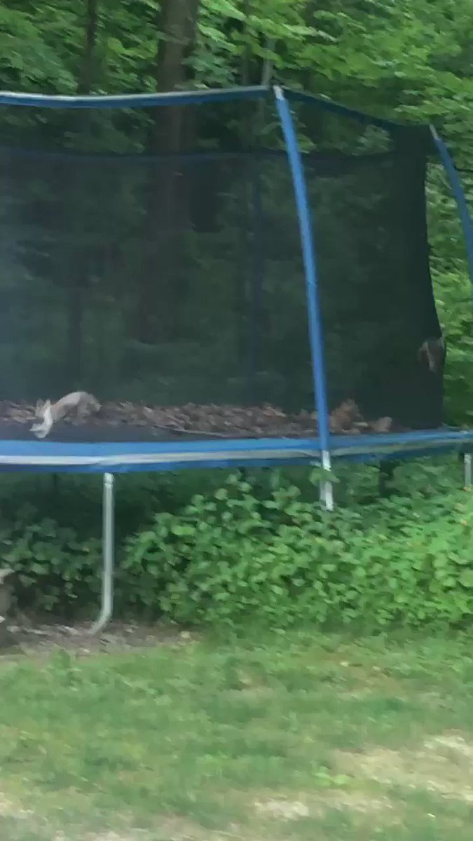 Somehow all of the neighborhood cats managed to get into our trampoline...