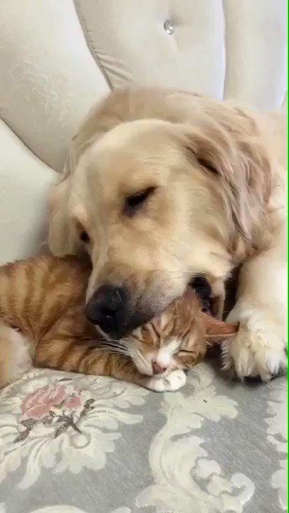この状況で寝れる猫ちゃん
