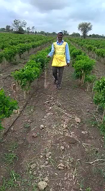 Brilliant & #creative. Good to see the #innovation done by this #farmer from #maharashtra to broadcast complex #fertiliser in his field. Made his work simple by using shoulder support bag made of #IFFCO fertiliser sacs. #Initiative with #Innovation performs better than others.