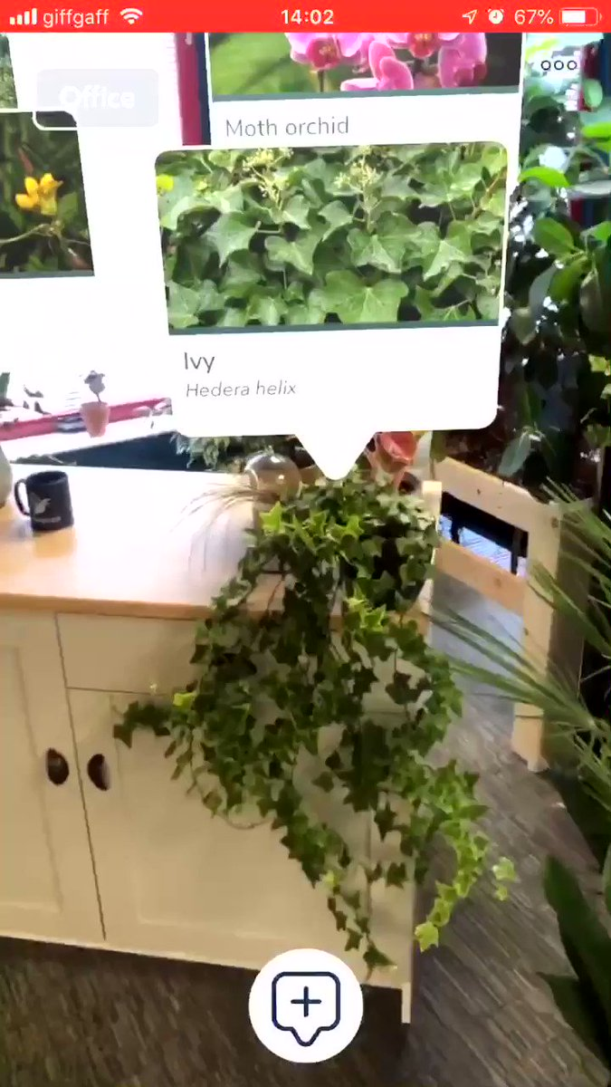 An Augmented Reality Plant App for Identification and Growing Information!MT @CandideTech #ar #AugmentedReality #MR #XR #CR #MixedReality #innovation #plantid #botany #camping #hiking #survival #cool #outdoors