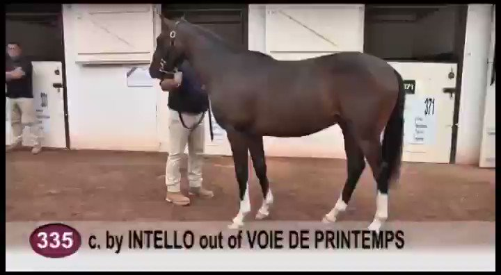 7f945ef43919f KOREVSKY lands the Prix de Belledonne under the colours of Magnolia Racing!  Trained by @EcurieNicolle, the son of @CPStudOfficial #Intello was bought  at the ...