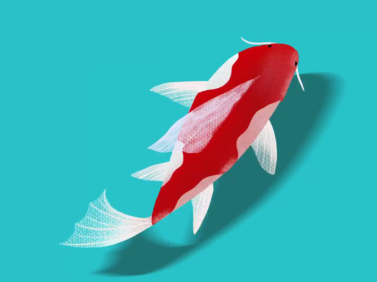 This summer break I wanted to learn to make digital art. I'm such a hardware person. I've been using an apple pen and my iPad Pro, inspired by by tech wizards like @mcelroy23 and @procreate genius @galgalshir here's my many attempts to make a Koi. #creativeprocess #iteration
