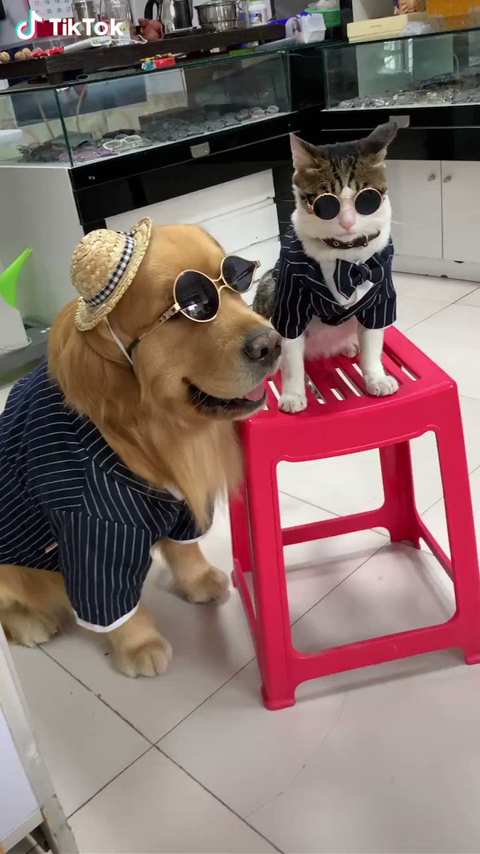 RT @nikoniko1290: 決まりすぎてる😳 #犬 #猫 #オシャレ #らーめんじょあ #令和の怪物 https://t.co/hHmRj40AxA